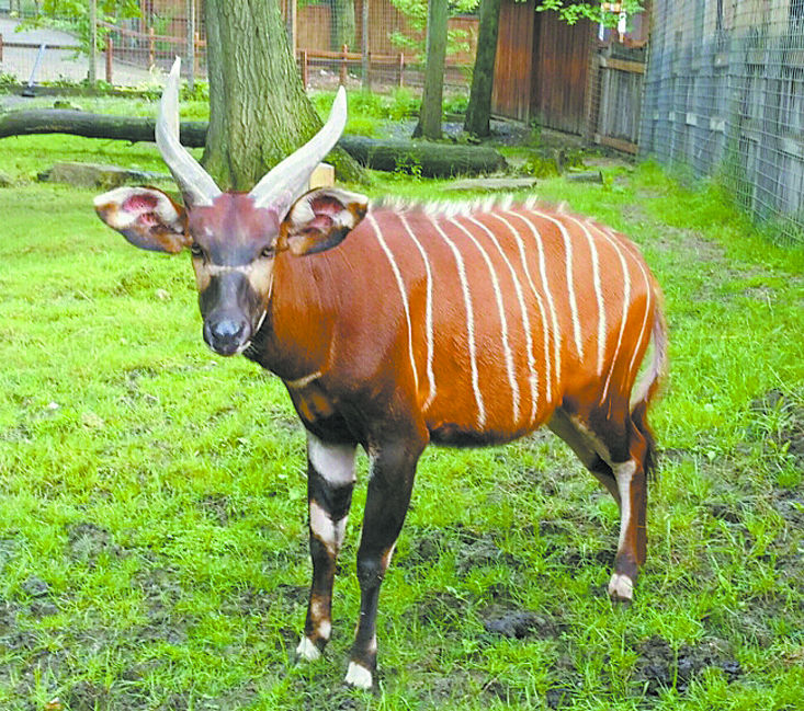 Living Treasures antelope