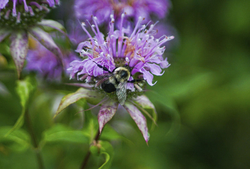 Bees, blooms part of new GCC project