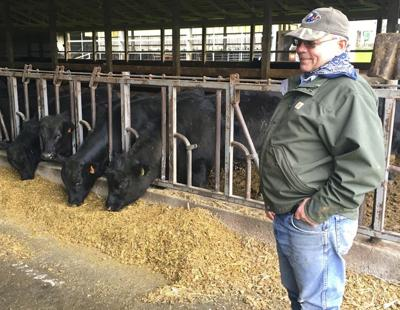 Virus hurting dairy, beef cattle farms