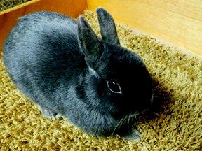 ali-rabbits11babygrey.jpg