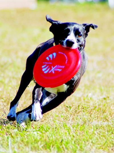 Campground hosts dog competitions