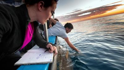 Courtesy of Hagai Nativ/Morris Kahn Marine Research Station/University of Haifa. via JNS  Leigh Kroeger (left) and Eyal Bigal study sharks off Israel's Hadera coast.