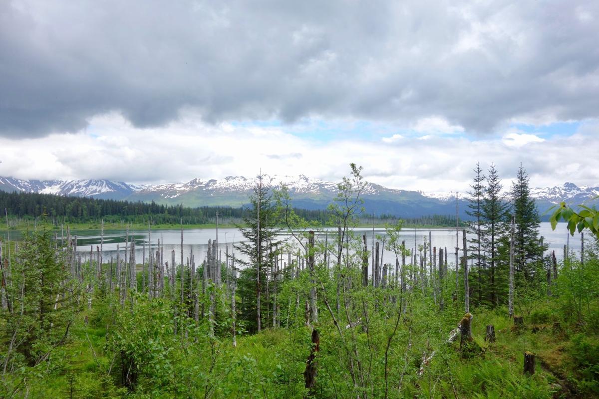 Russell Fjord vista (1).jpg