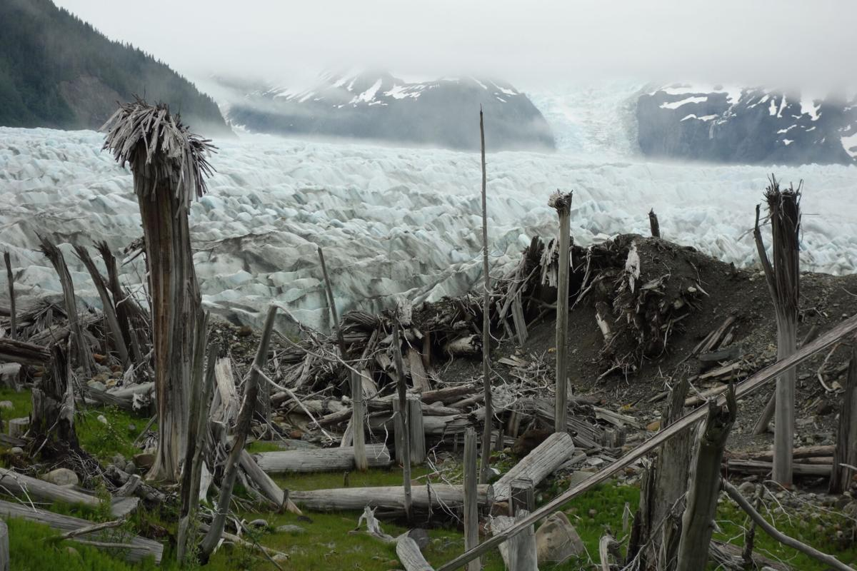 1. Ghost forest campsite.jpg