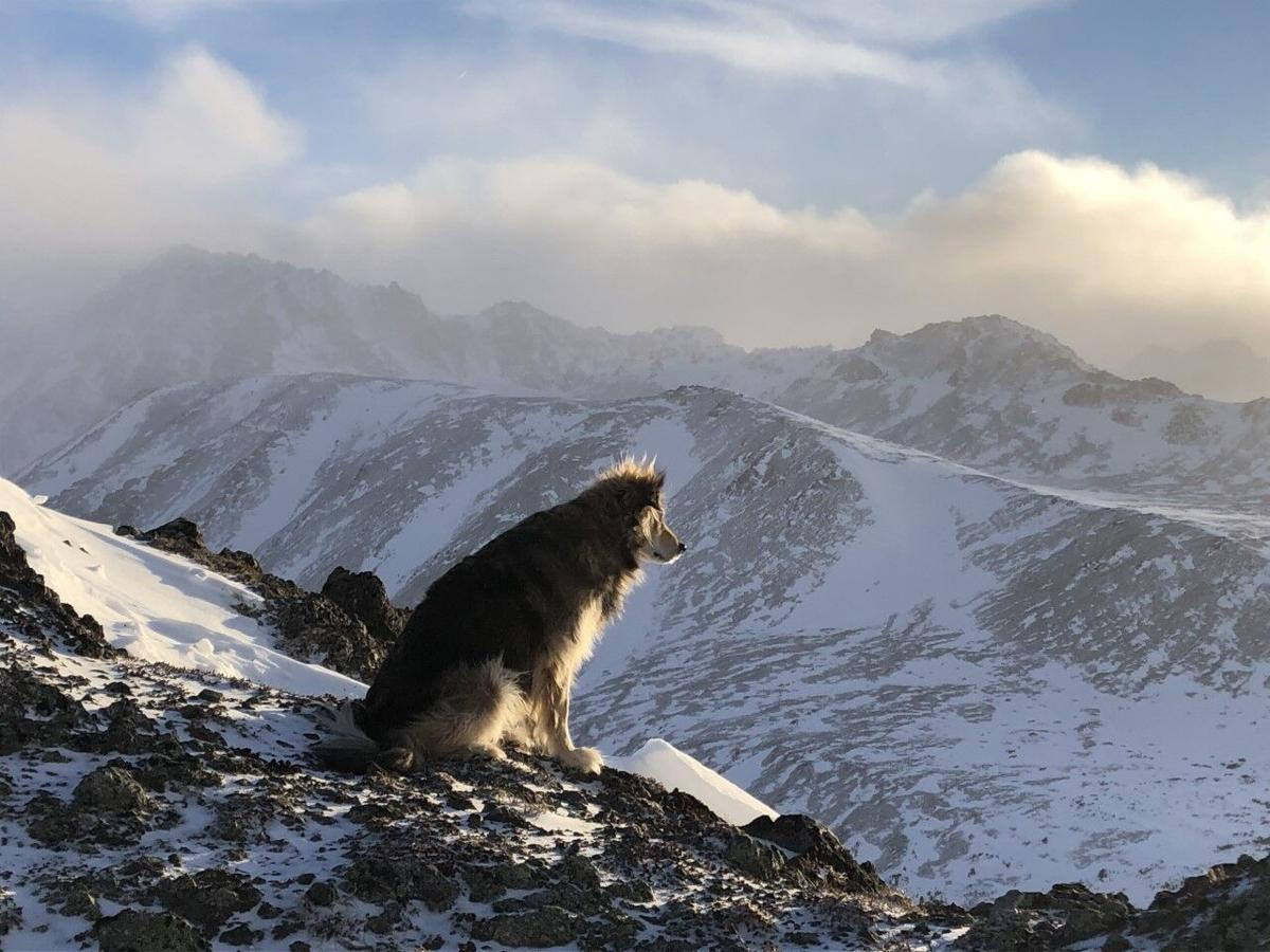 City Wilds - Denali the dog
