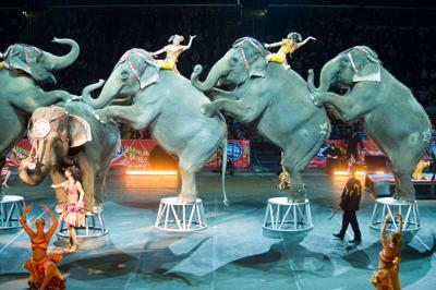 Ringling Bros. to remove elephant act in conservation bid