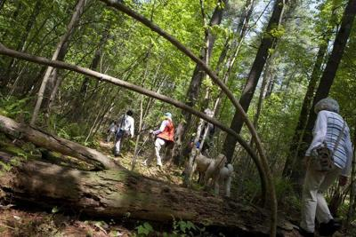 Harold Parker State Forest activities
