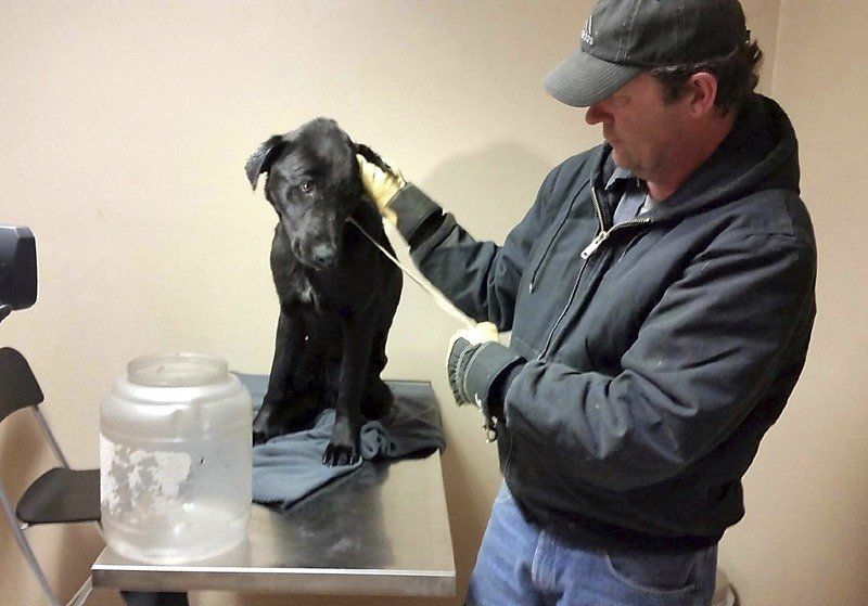 Dog's head dislodged after stuck in jar for weeks