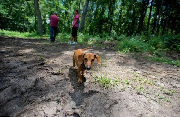 New dog park fetches a Labor Day opening date | Local News
