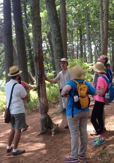 Want to learn about the forest?