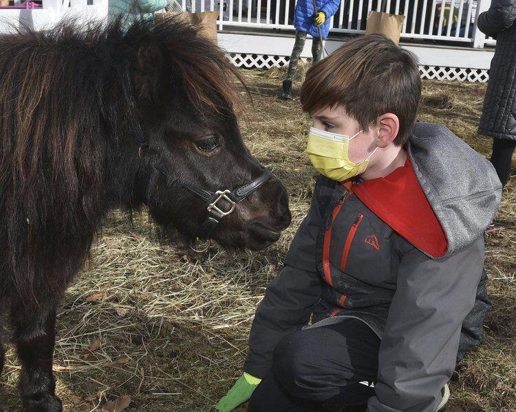 No horsing around -- it's serious work