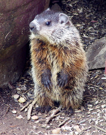 Groundhog Day Extravaganza' isn't same old day of events