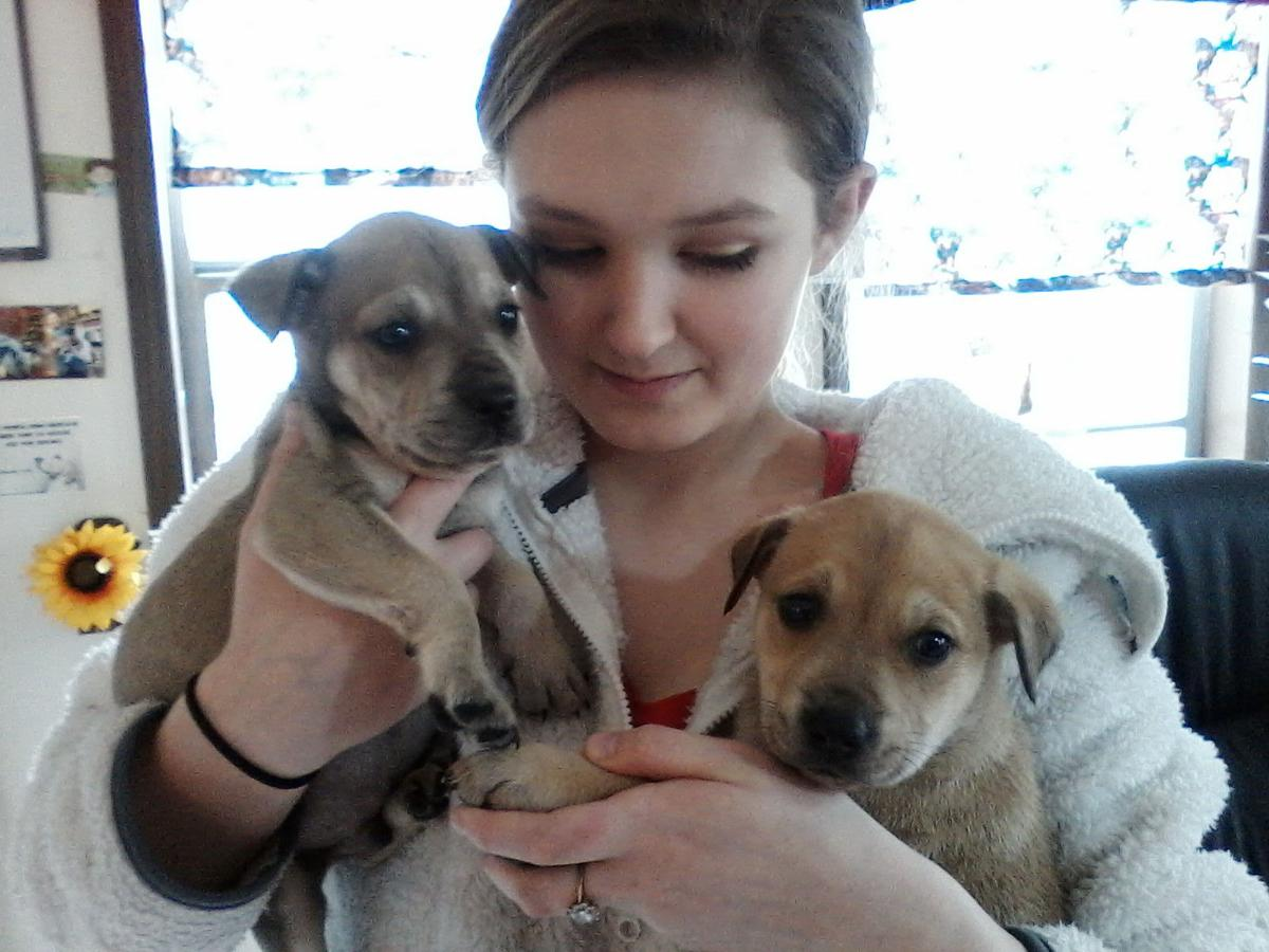 League for Animal Welfare: mixed-breed puppies