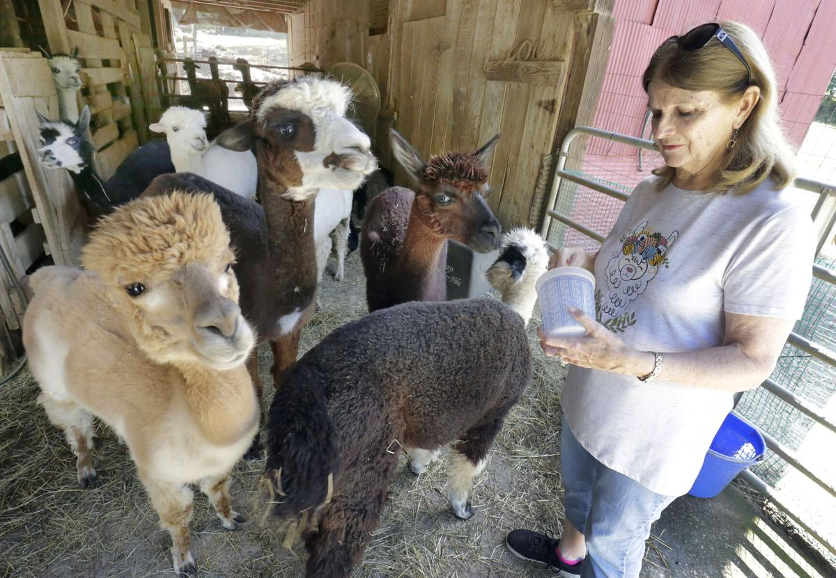 Blackberry Hill Alpacas