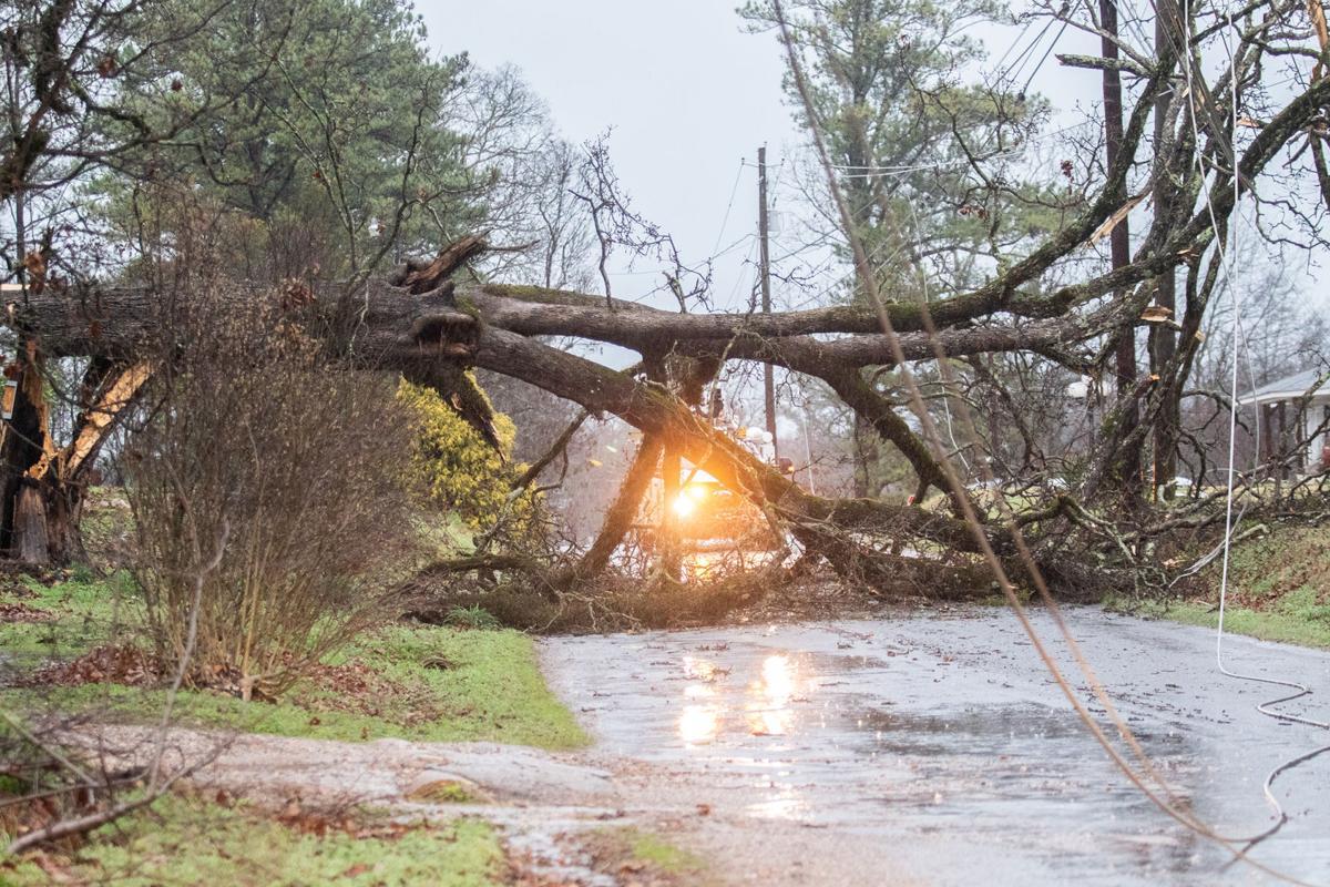 huge tree down Jenifer Rd Munford-bc.jpg