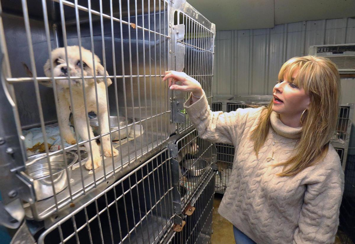 Pet projects: As county prepares to resume animal control work, nonprofit plans its next moves