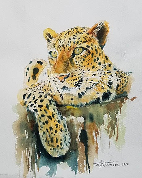 'Lounging Leopard'