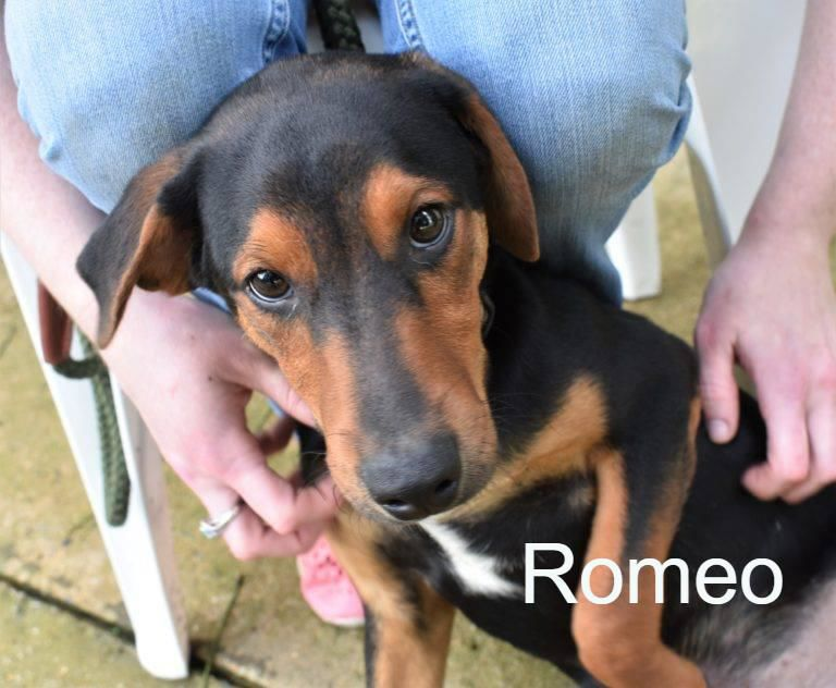 League for Animal Welfare: Romeo