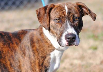 Anniston Animal Shelter: Nina