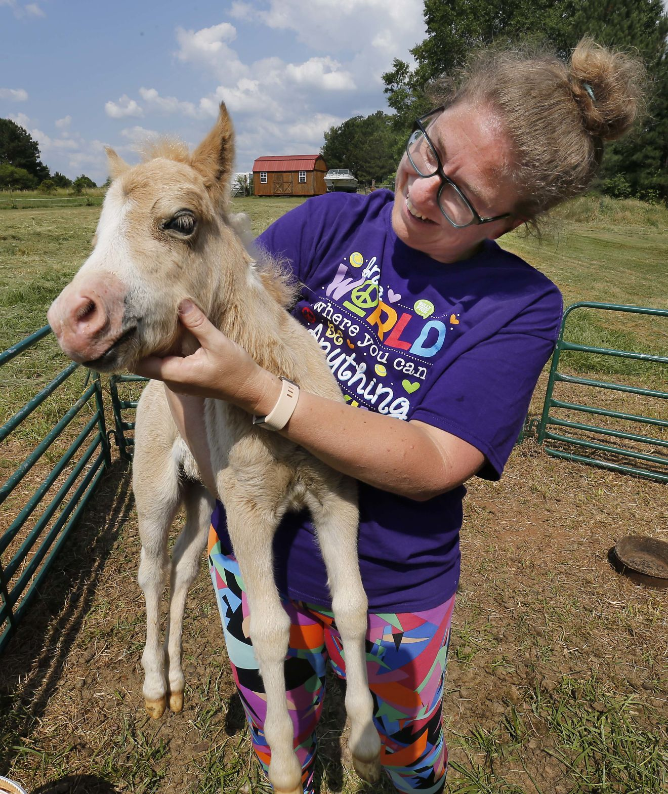 Photos Mini Horses News Annistonstar Com