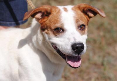 Anniston Animal Shelter: Gracie