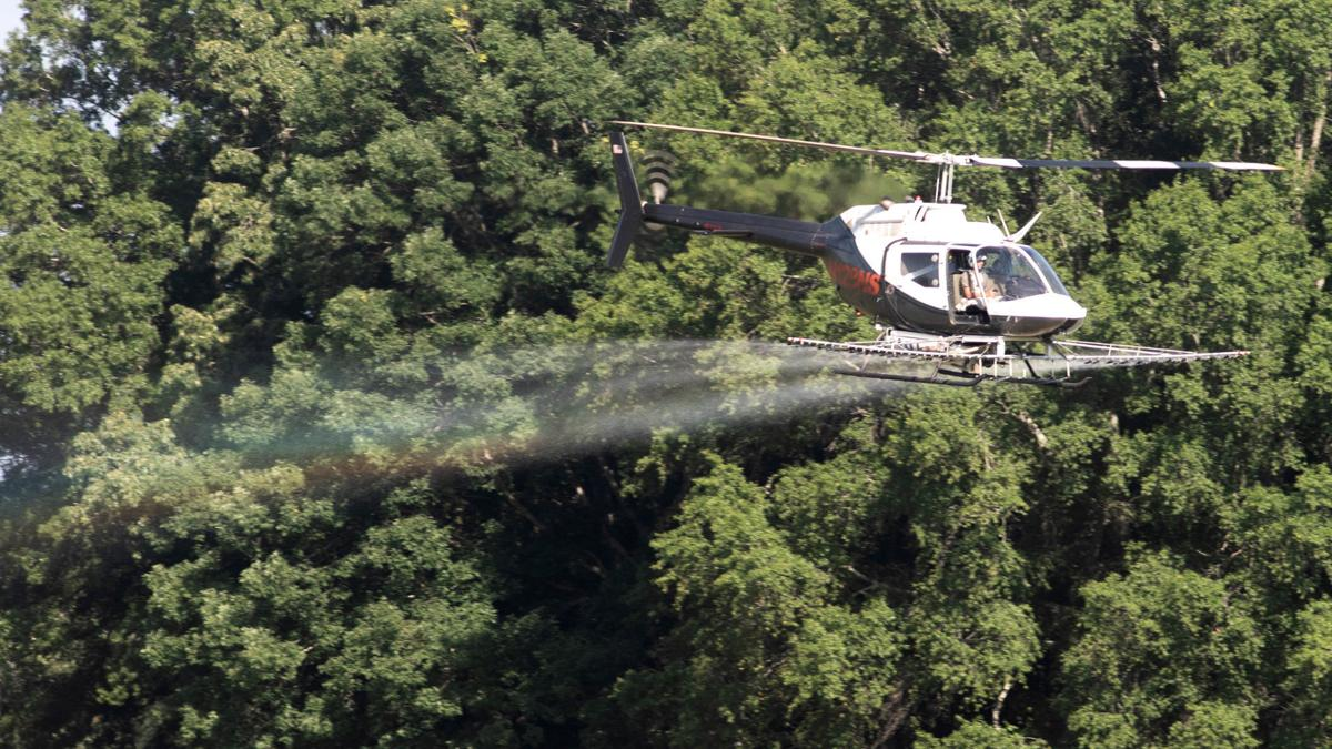 PHOTOS: Helicopter crop dusting