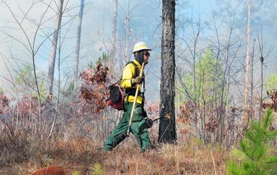 Prescribed Burn Talladega National Forest
