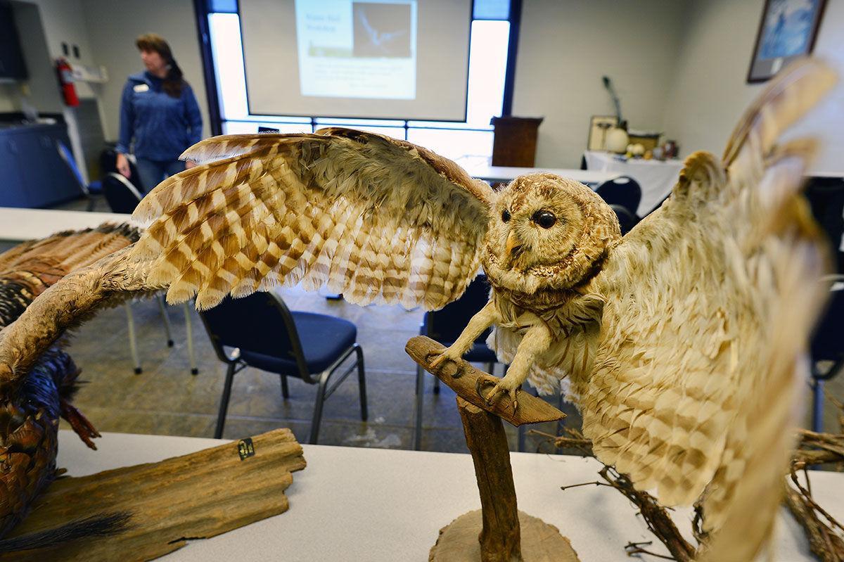 Bird workshop