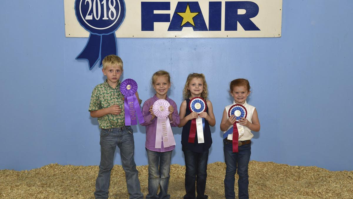 Local youth bring home Showmanship, Premier Exhibitor awards from youth sheep show (gallery)