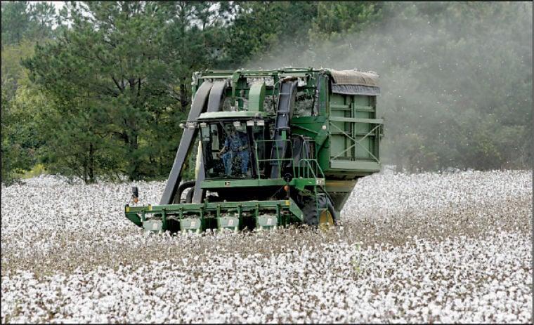 Cotton Amendment