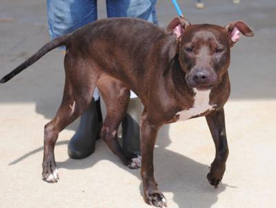Anniston Animal Shelter: Onyx