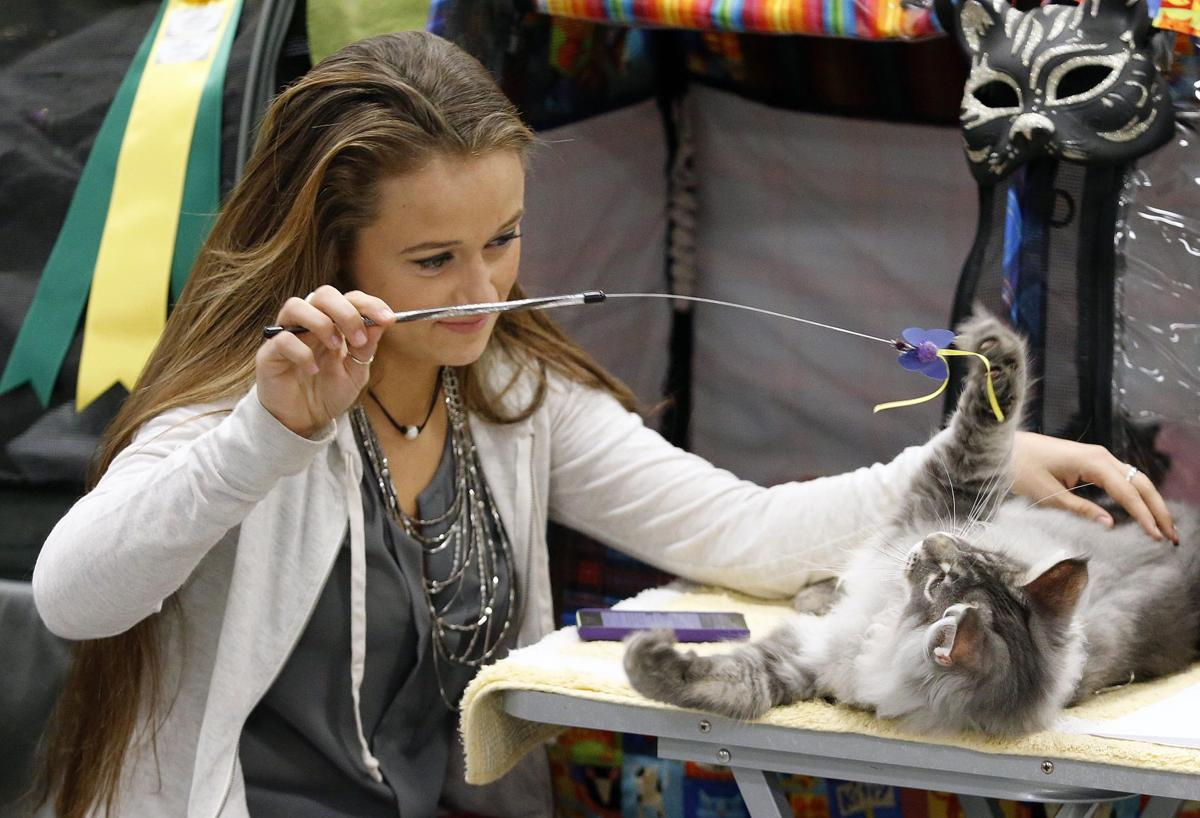 Alabama Paws & Claws Cat Show