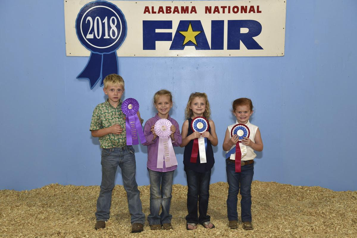Alabama National Fair-sheep 2018 (1).jpg