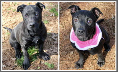 Will and Grace are Pets of the Week at Pell City Animal Control Center