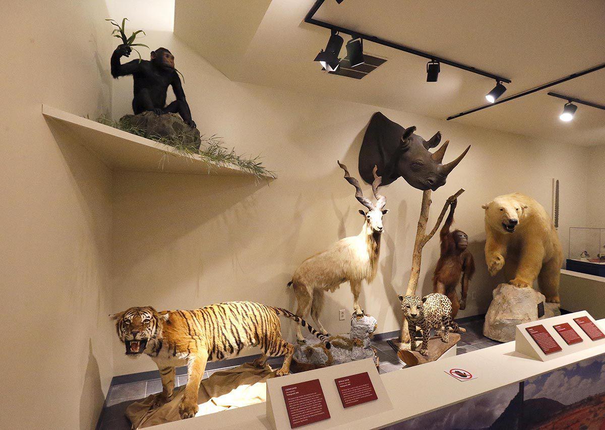 'Battling Extinction'