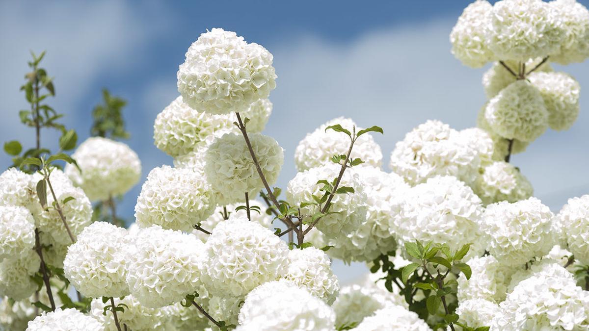 Welcome, spring (photos)