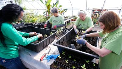 Saturday plant sale benefits the 'Tree Amigos' program for