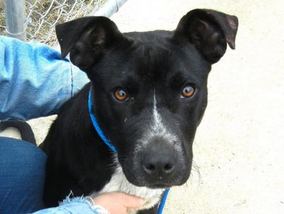 Anniston Animal Shelter: Hero