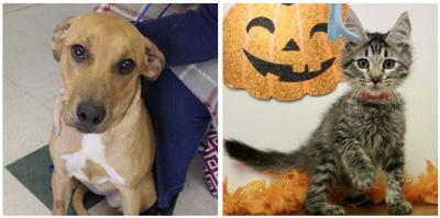 Pets of the Week: Meet Lemon Drop and Miss Peach
