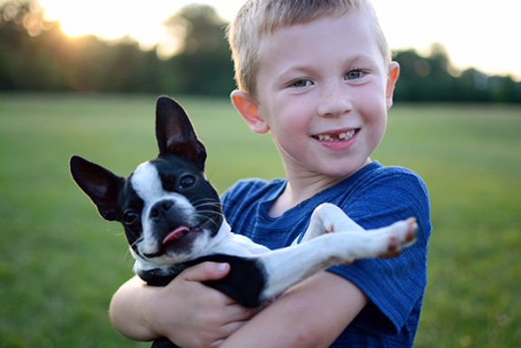 SHERRY KUGHN: Boston terriers wrap owners around paw