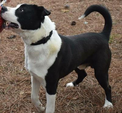 Anniston Animal Shelter: Perry Carter