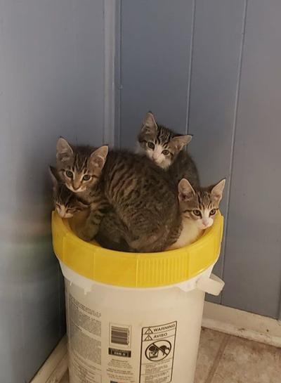 League for Animal Welfare: Kittens