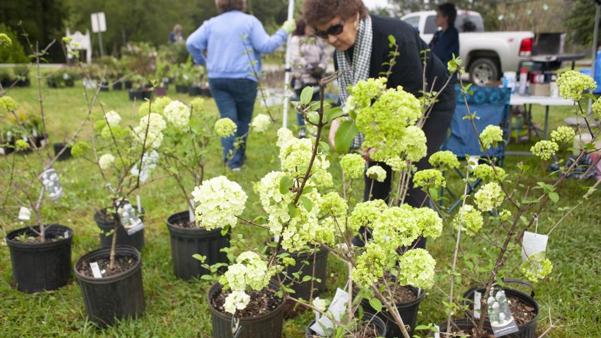UPDATED: Pell City Garden Club will continue plant sale Saturday (photo gallery)