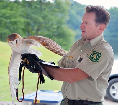 Stober owl