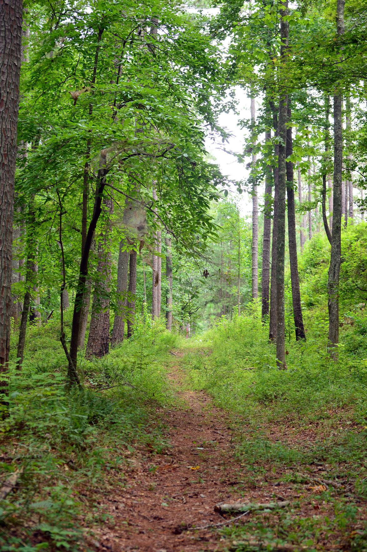 Pinhoti Trail