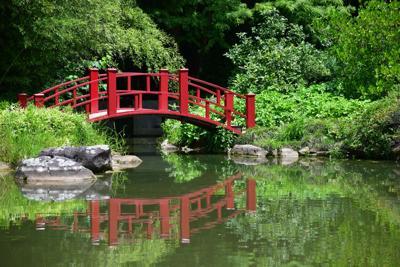 Bontanical Gardens BW 40.JPG