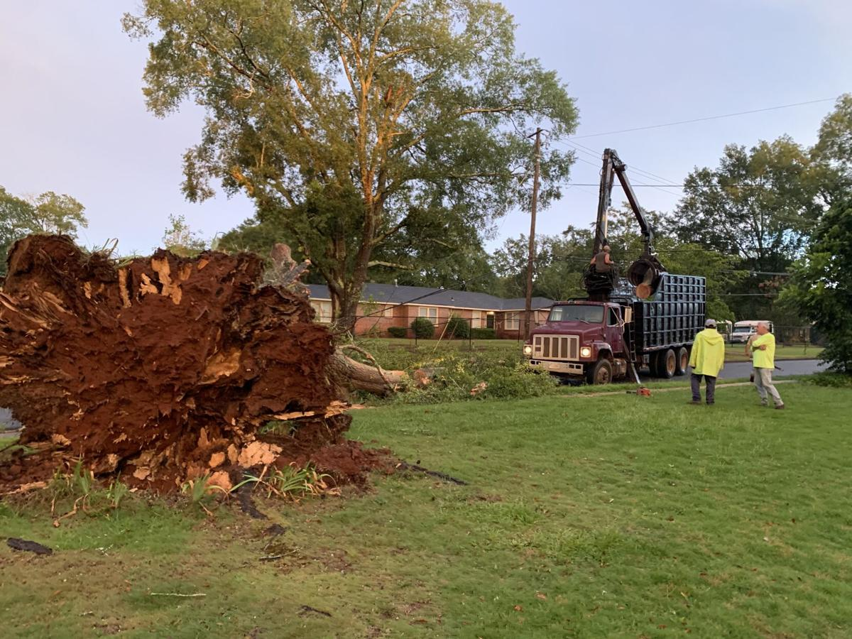 Friday afternoon storms bring down tree in Talladega (with photos)