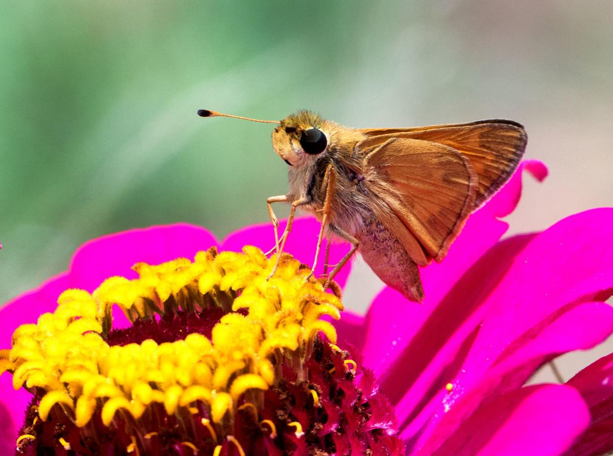bugs and flowers1-bc.jpg