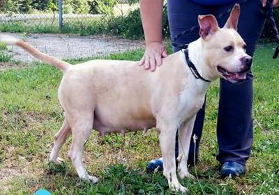 Anniston Animal Shelter: Sweet Pea