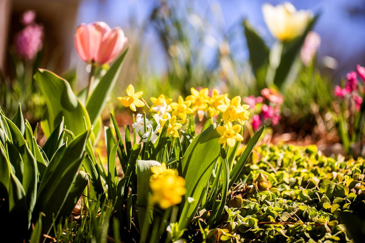 early blooms2-bc.jpg